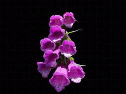 обои для рабочего стола 3000x2250 цветы, дигиталис, наперстянка