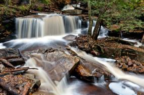природа, водопады, ricketts, glen, state, park, pennsylvania