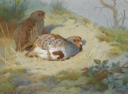 обои для рабочего стола 1600x1179 рисованные, archibald, thorburn