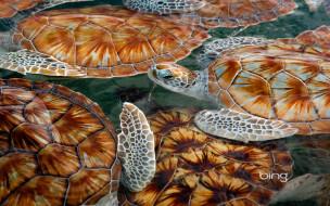 обои для рабочего стола 1920x1200 животные, Черепахи, черепахи