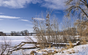 colorado, snowfield, природа, зима, деревья, кусты, снег