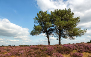обои для рабочего стола 1920x1200 природа, деревья, лето, поле