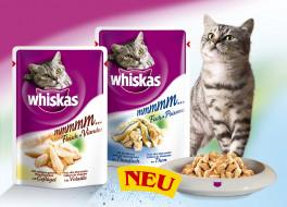 бренды, whiskas, корм, кот