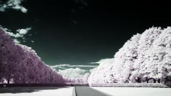 обои для рабочего стола 1920x1080 природа, зима, снег, деревья, облака