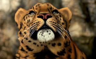 обои для рабочего стола 1920x1187 рисованные, животные, тигры, морда, голова, хищник, кошка, дикая, леопард