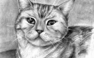 обои для рабочего стола 1680x1050 рисованные, животные, коты, кот