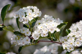 обои для рабочего стола 2048x1360 цветы, цветущие, деревья, кустарники, белый, ветка