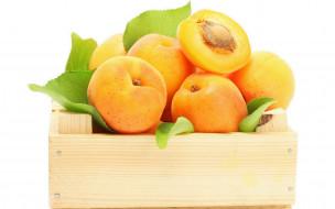 еда, персики, сливы, абрикосы, фрукты