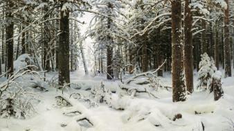 рисованные, иван, шишкин, зима, снег, лес, ели