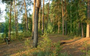 нижегородский, край, природа, лес, сосны, закат