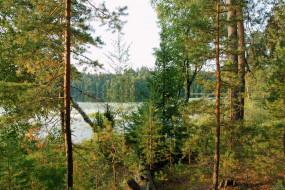 нижегородский, край, природа, лес, озеро