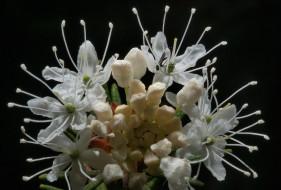 обои для рабочего стола 1617x1094 цветы, цветущие, деревья, кустарники, лепестки