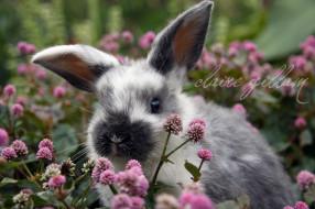 Обои животные, кролики, зайцы, уши, пестрый скачать обои для рабочего стола,картинки на рабочий стол,заставки,изображения из раз