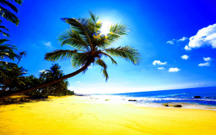 картинки  море пляж солнце пальмы