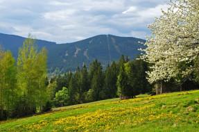 обои для рабочего стола 2144x1424 природа, пейзажи, поле, Чехия, шумава, лес, vrch, spicak, гора, шпичак, горы