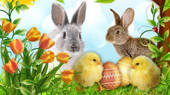 разное, компьютерный, дизайн, яйца, кролики, цыплята, тюльпаны