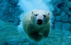 обои для рабочего стола 3600x2314 животные, медведи, белый, медведь, под, водой