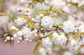 обои для рабочего стола 2048x1365 цветы, цветущие, деревья, кустарники, бутоны, цветение, ветка