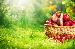 еда, Яблоки, яблоки, корзина, лучи, трава