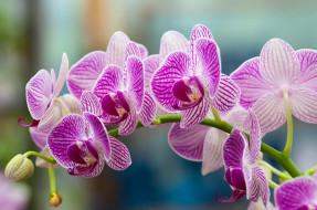 обои для рабочего стола 2048x1360 цветы, орхидеи, ветка, розовый