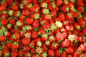еда, клубника, земляника, ягода