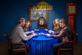 картинки покер приколы
