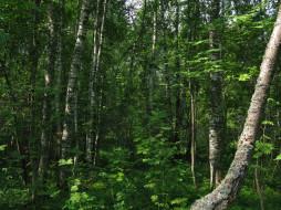 Стола природа лес русский лес