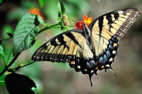 Животные крылья, махаон