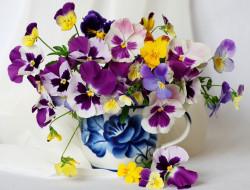 Цветы кувшин, разноцветный, яркий