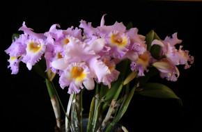 обои для рабочего стола 2493x1637 цветы, орхидеи