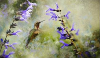 рисованные, животные, колибри