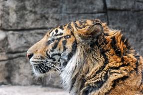обои для рабочего стола 2048x1363 животные, тигры, профиль, морда, тигр
