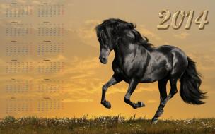 календари, животные, закат, поле, вороная, лошадь