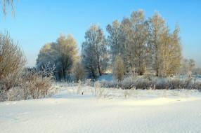 природа, зима, солнце, деревья, снег