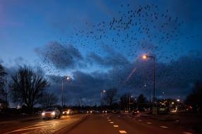 разное, транспортные средства и магистрали, птицы, голландия, дорога, машины, огни, ночь