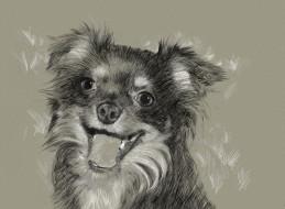 рисованные, животные, собака