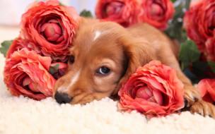 обои для рабочего стола 2560x1600 животные, собаки, собака, цветы