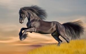 рисованные, животные, поле, лошадь