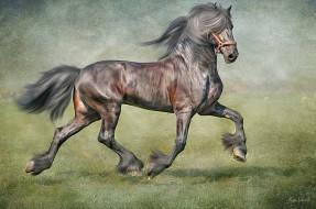 рисованные, животные, текстура, лошадь, конь