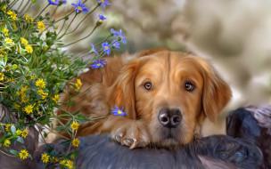 рисованные, животные, текстура, цветы, собака