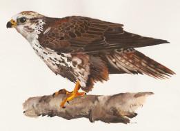 обои для рабочего стола 2133x1557 рисованные, животные,  птицы,  орлы, орел, клюв