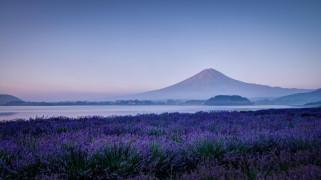 природа, луга, фудзияма, Япония, утро, фудзи, поле, цветы, лаванда, гора