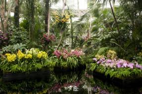 Ботанический сад Нью Йорк обои для рабочего стола 3000x1996 ботанический сад нью йорк, природа, парк, сад, цветы, орхидеи, сша