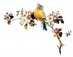 рисованные, животные, птица, ветка
