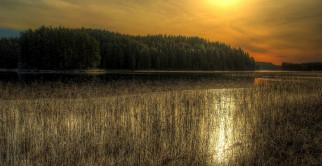 природа, реки, озера, свет, лес, река, тростник, тучи