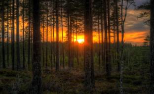 природа, восходы, закаты, тучи, заря, сумрак, лес