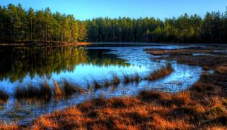 природа, реки, озера, трава, осень, река, лес, излучина