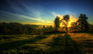 природа, восходы, закаты, рассвет, луг, лес, облака