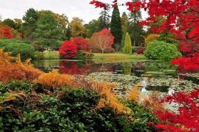 природа, парк, деревья, кусты, водоём, краски, осень