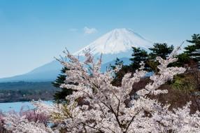 природа, горы, сакура, фудзияма
